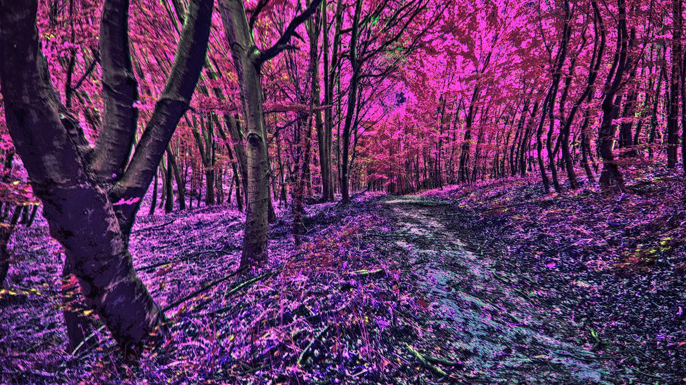 Mystischer Wald Hintergrundbilder Kostenlos