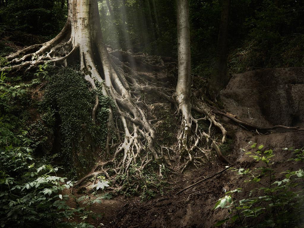 Mystischer Wald 006 - Hintergrundbild