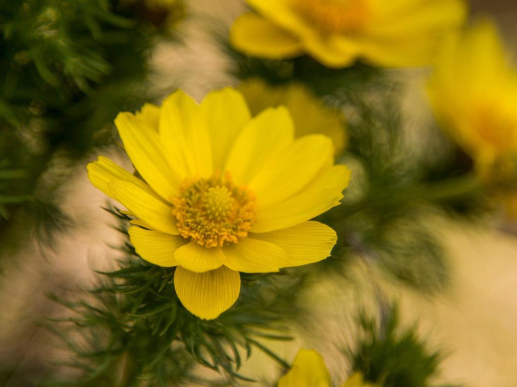 Zullian.com - ~ Beispiele Zu Ihrem Haus Raumgestaltung Gelbe Dekowand Blume Fr Wohnzimmer