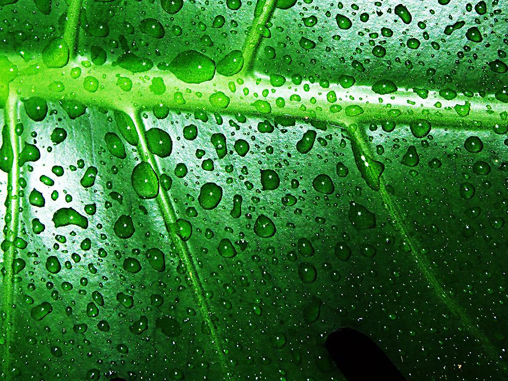 Zöld levél vízcseppekkel háttérkép
