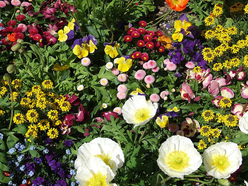 Tarka virágok
