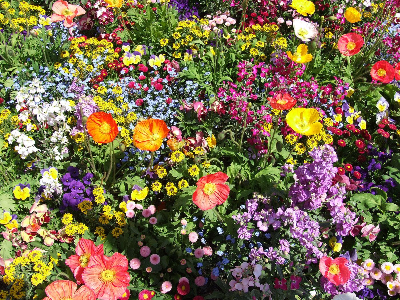 Bunte Blumen Kostenlose Bilder