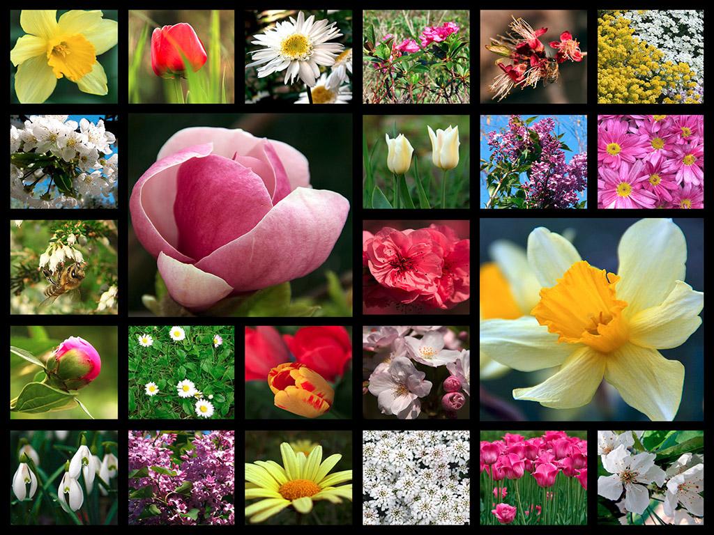 Virágos mozaik