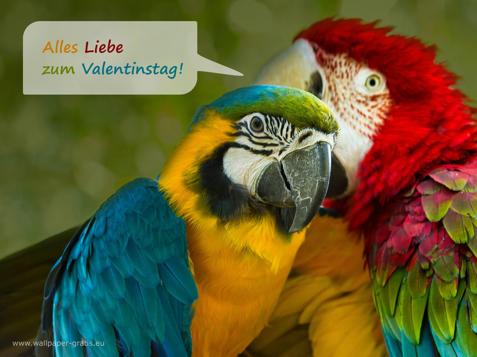 Tier w nscht alles liebe zum valentinstag 001 for Valentinstag bilder kostenlos