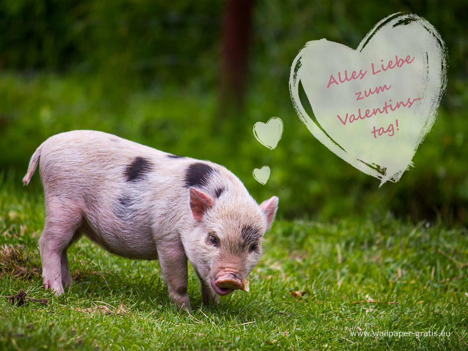 Tier w nscht alles liebe zum valentinstag 006 - Valentinstag bilder kostenlos ...