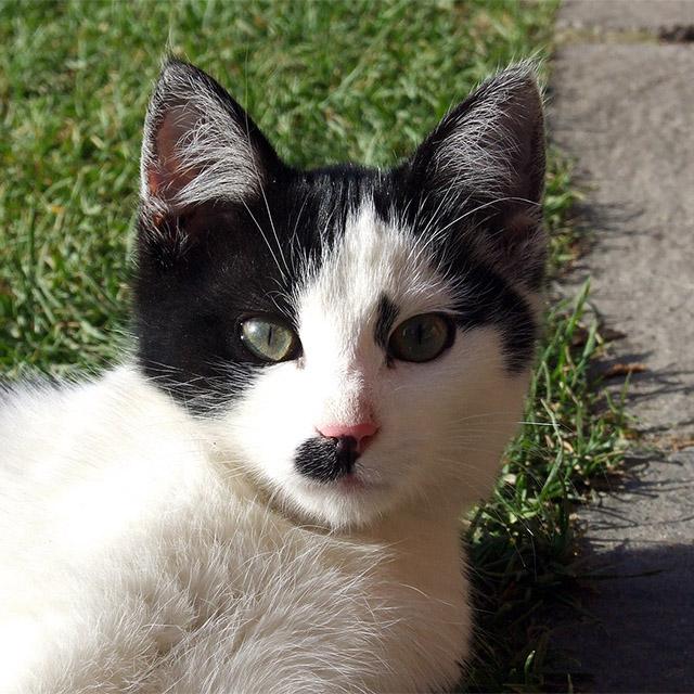 Katze #015 - schwarz-weiss - Kostenloses Hintergrundbild