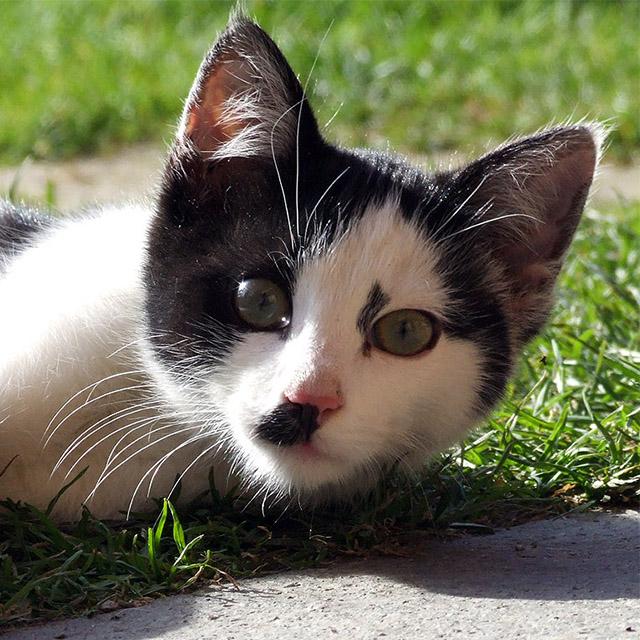 Katze #018 - schwarz-weiss - Kostenloses Hintergrundbild