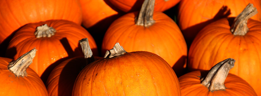 Herbstdekoration Kurbis : Hintergrundbilder kostenlos: Herbst