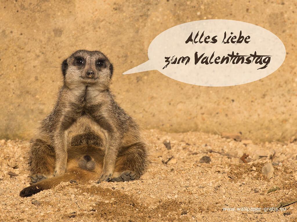 Tier w nscht alles liebe zum valentinstag 004 - Valentinstag bilder kostenlos ...