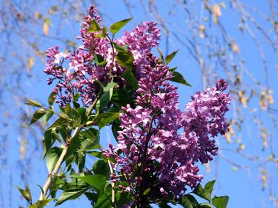 Frühling Hintergrundbilder Für Dich
