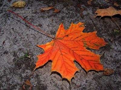 Herbstbilder hintergrund desktop