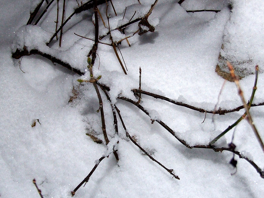 Winter Kostenlose Hintergrundbilder