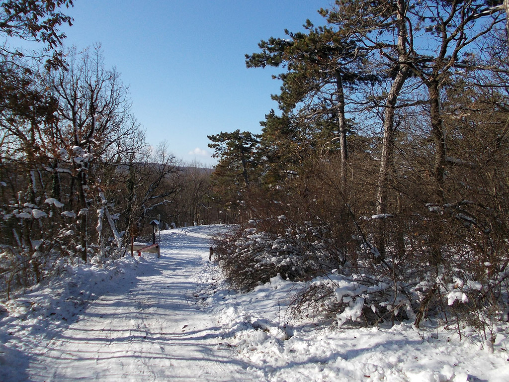 winter 108 hintergrundbild gratis - photo #22
