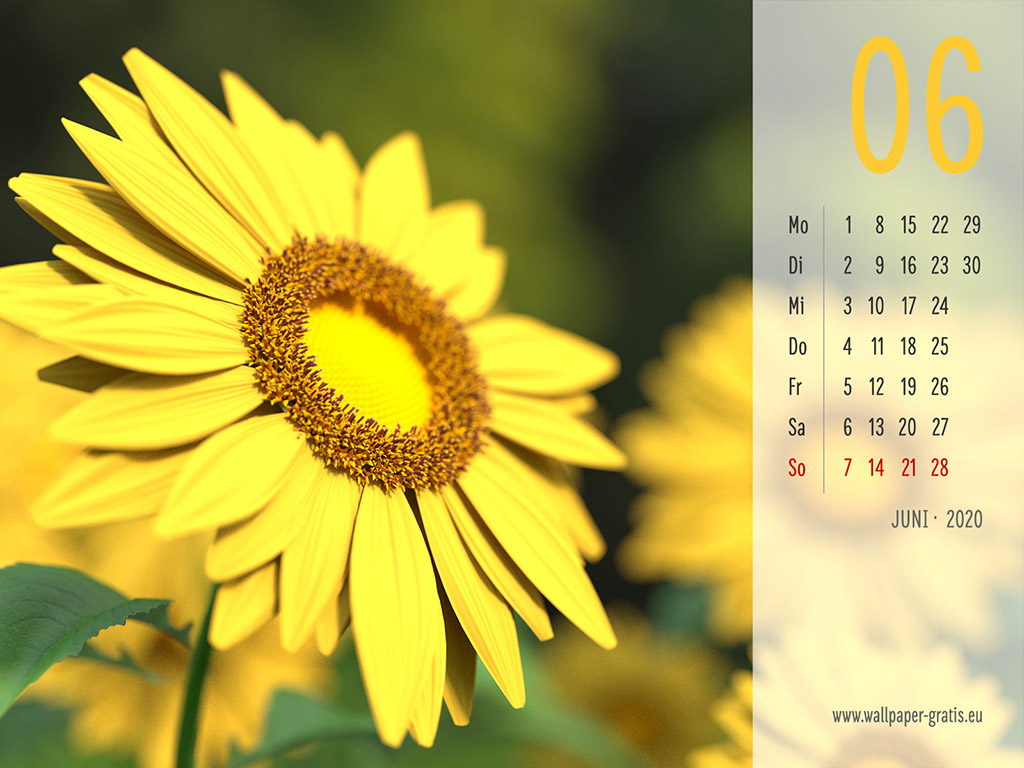 Juni - Kalender 2020 - Blume