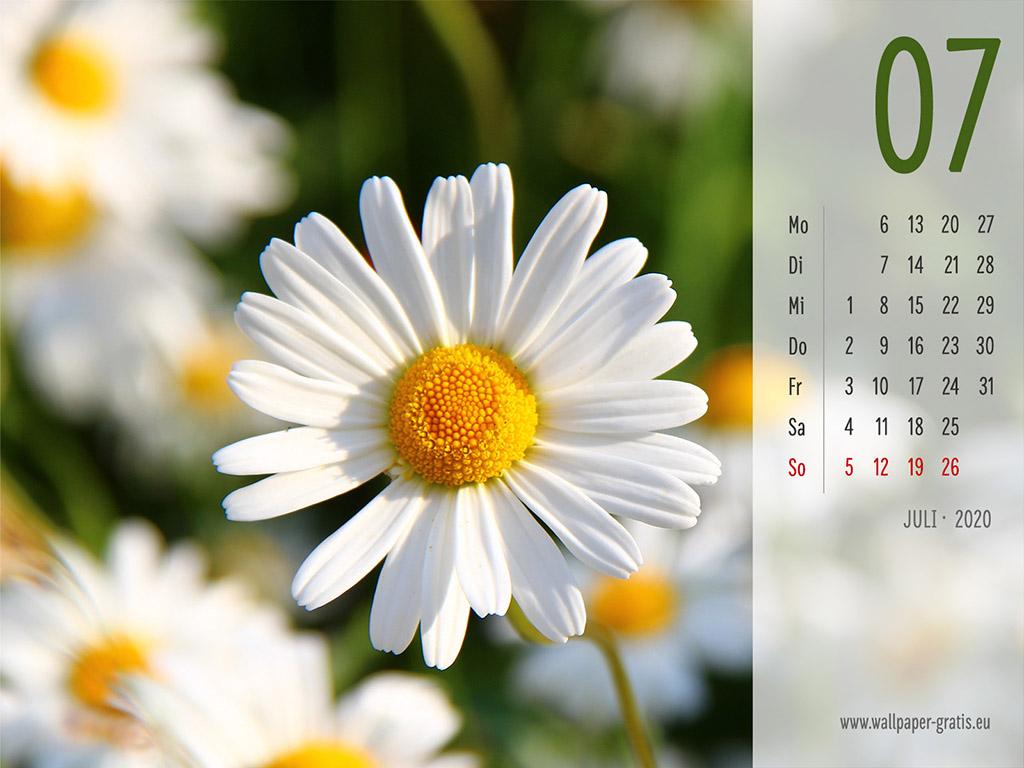 Juli - Kalender 2020 - Blume