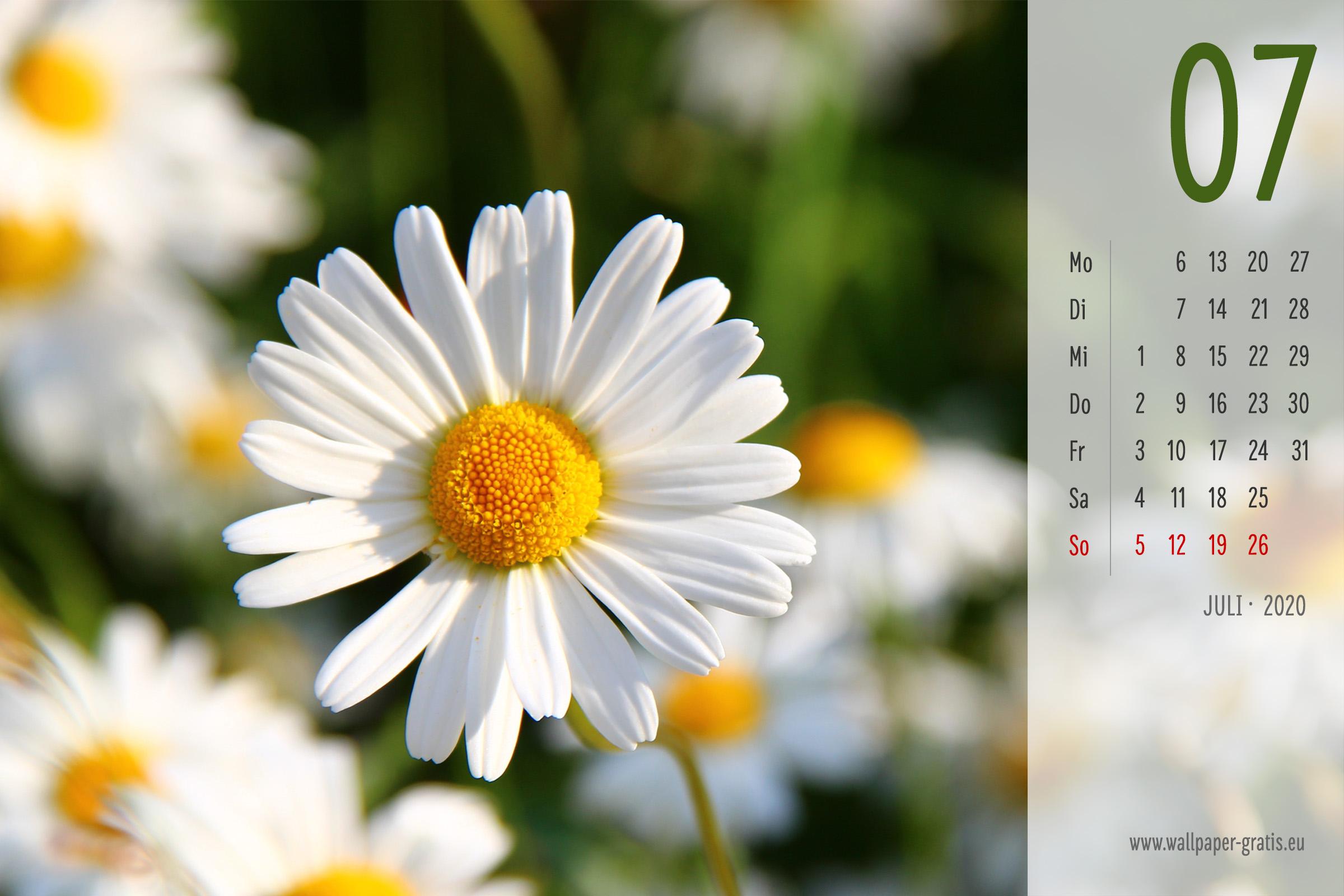 Blume Kalender 2020 Kostenlose Kalenderbl 228 Tter