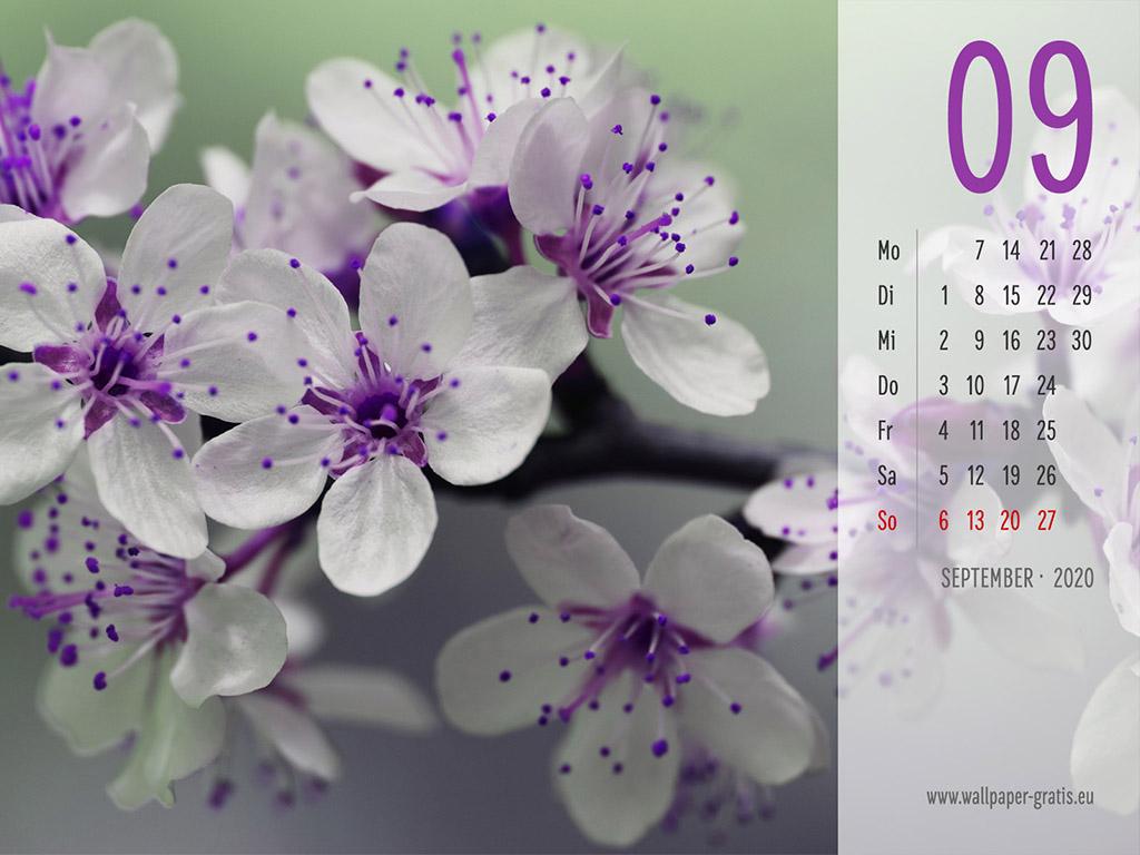September - Kalender 2020 - Blume