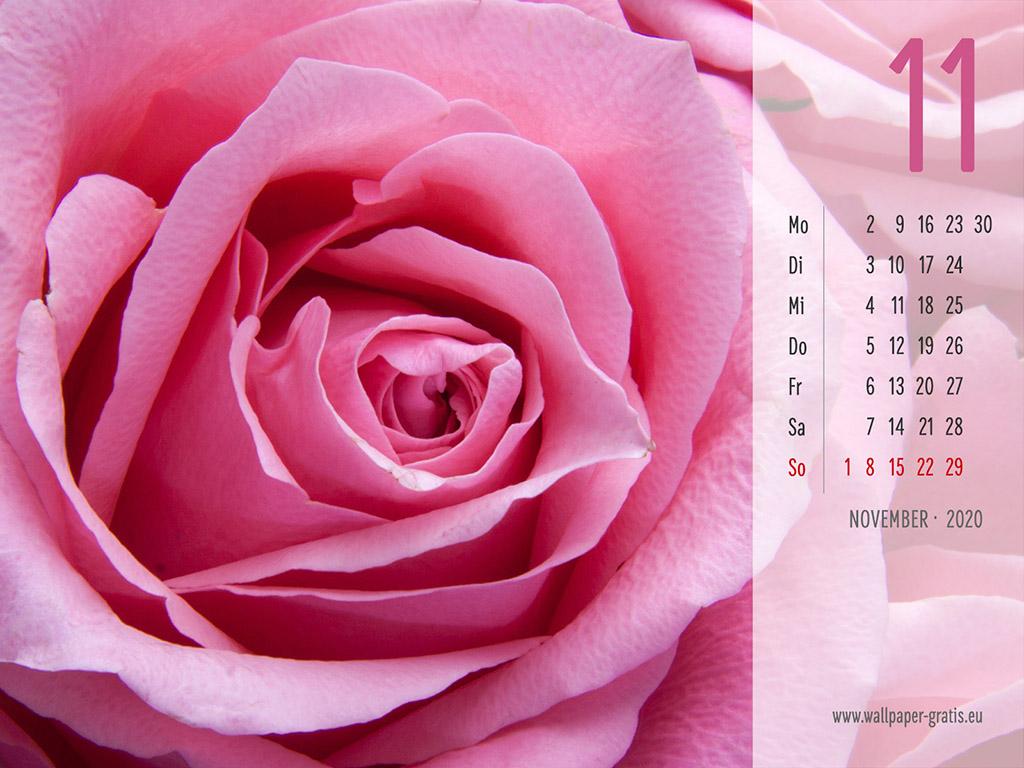 November - Kalender 2020 - Blume