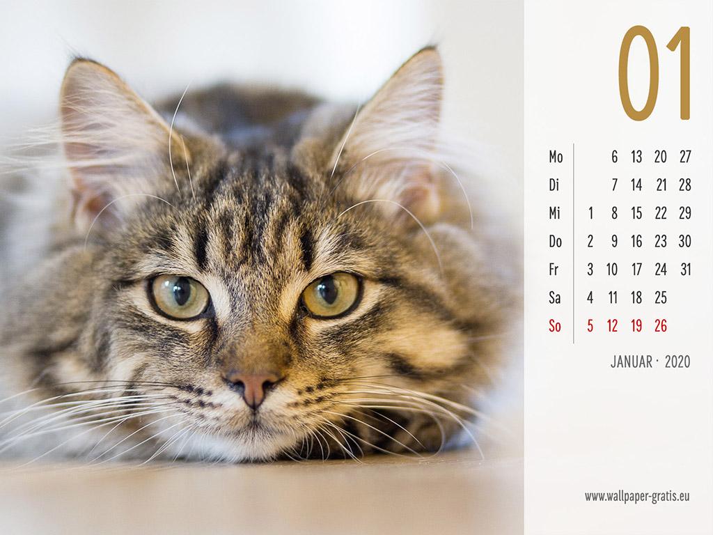Januar - Kalender 2020 - Katze
