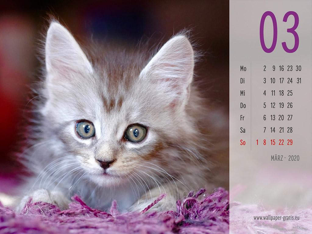 März - Kalender 2020 - Katze