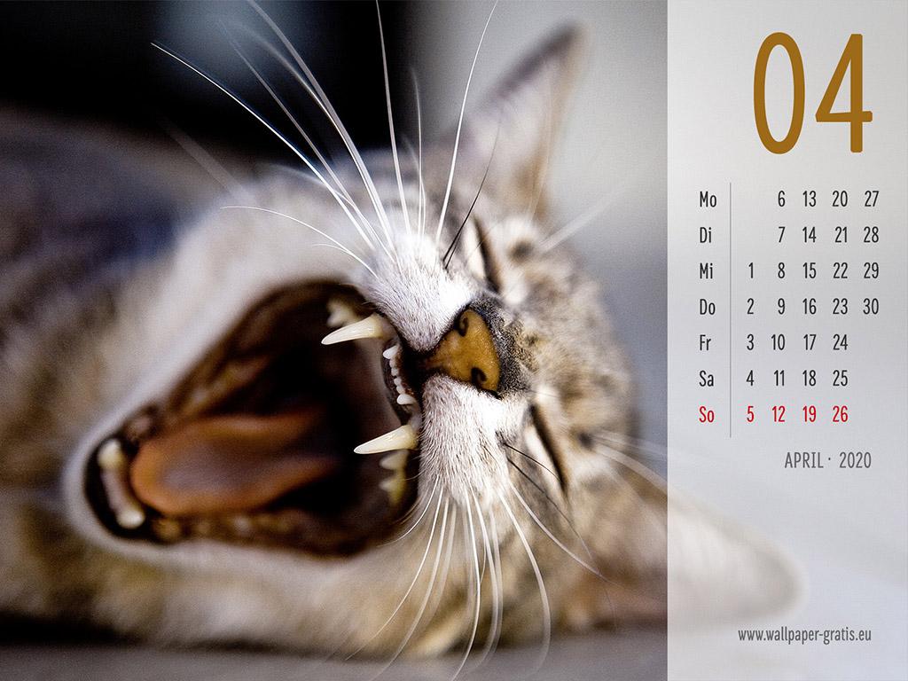 April - Kalender 2020 - Katze