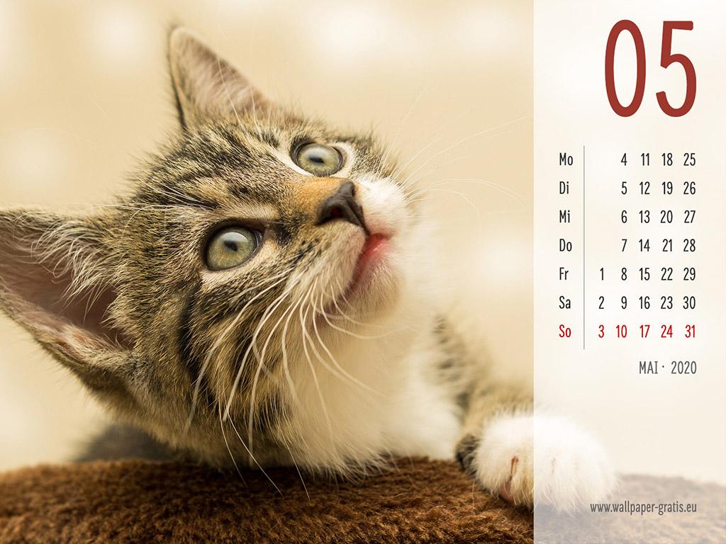 Mai - Kalender 2020 - Katze