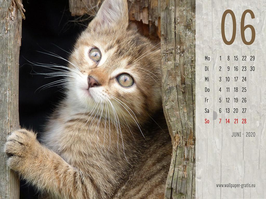 Juni - Kalender 2020 - Katze