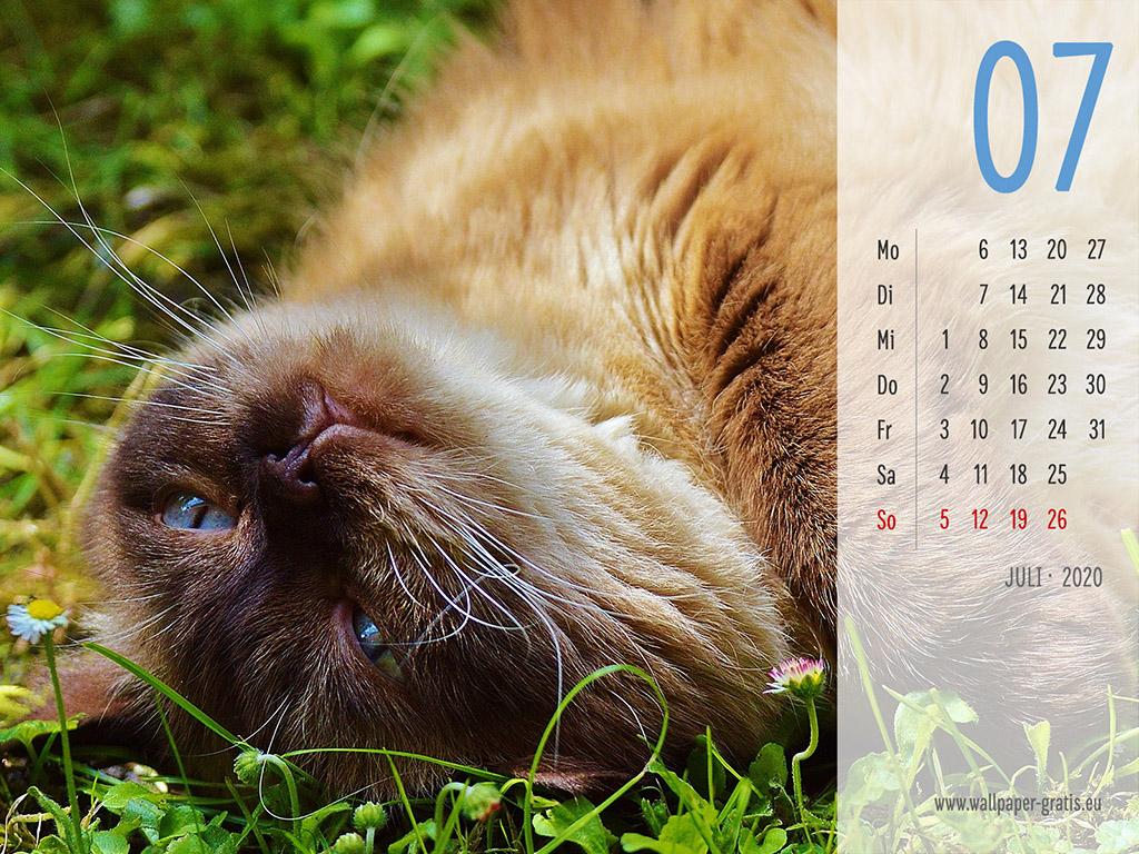 Juli - Kalender 2020 - Katze