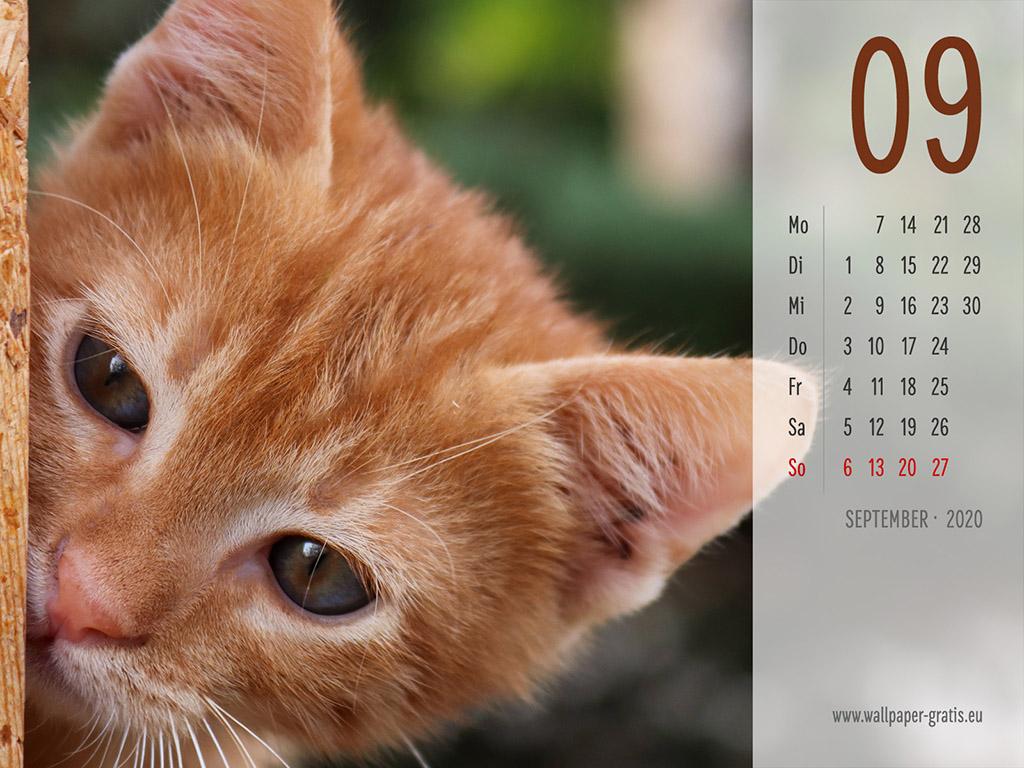 September - Kalender 2020 - Katze
