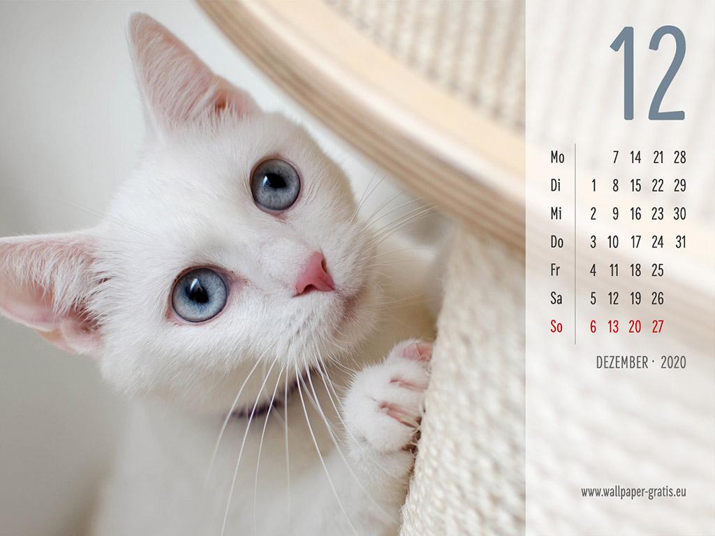 Dezember - Kalender 2020 - Katze