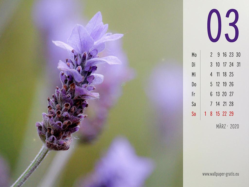 März - Kalender 2020 - Lavendel