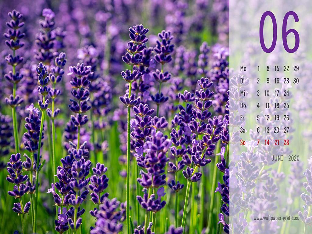 Juni - Kalender 2020 - Lavendel