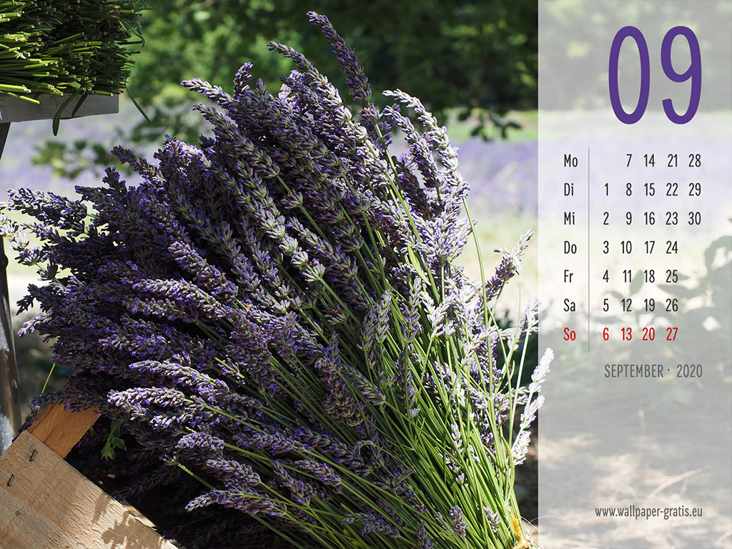 September - Kalender 2020 - Lavendel