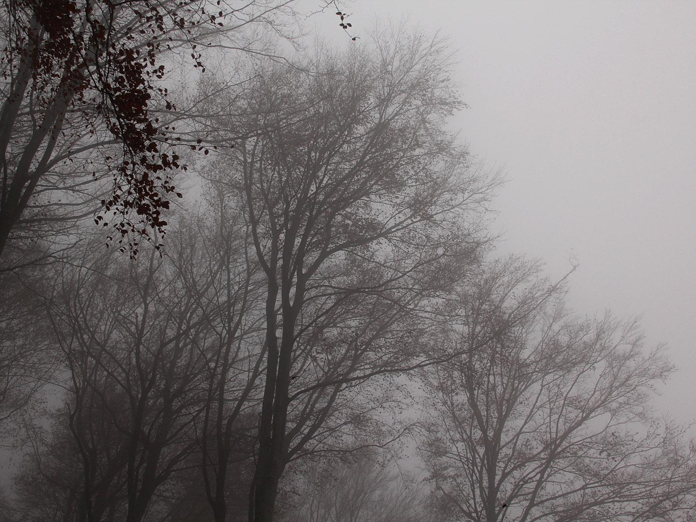 Nebel-Matchmacherei