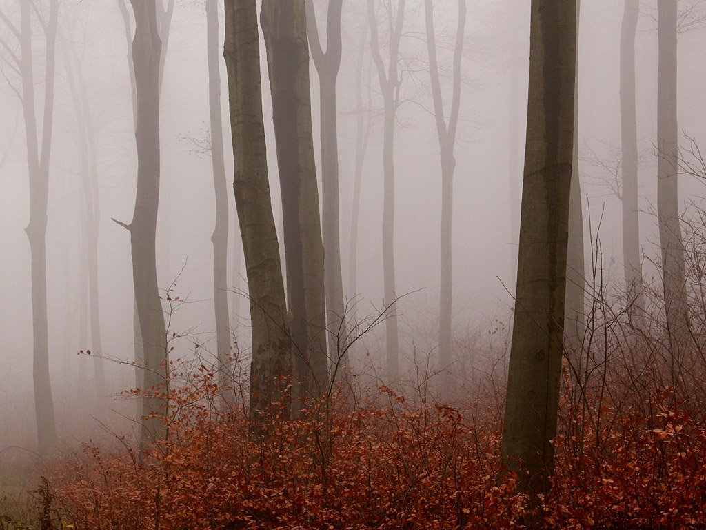 Nebel Im Herbstwald 014 Kostenloses Hintergrundbild