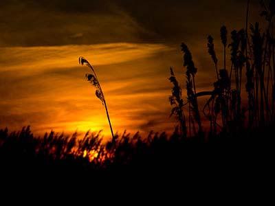 Natur Hintergrundbilder Kostenlos