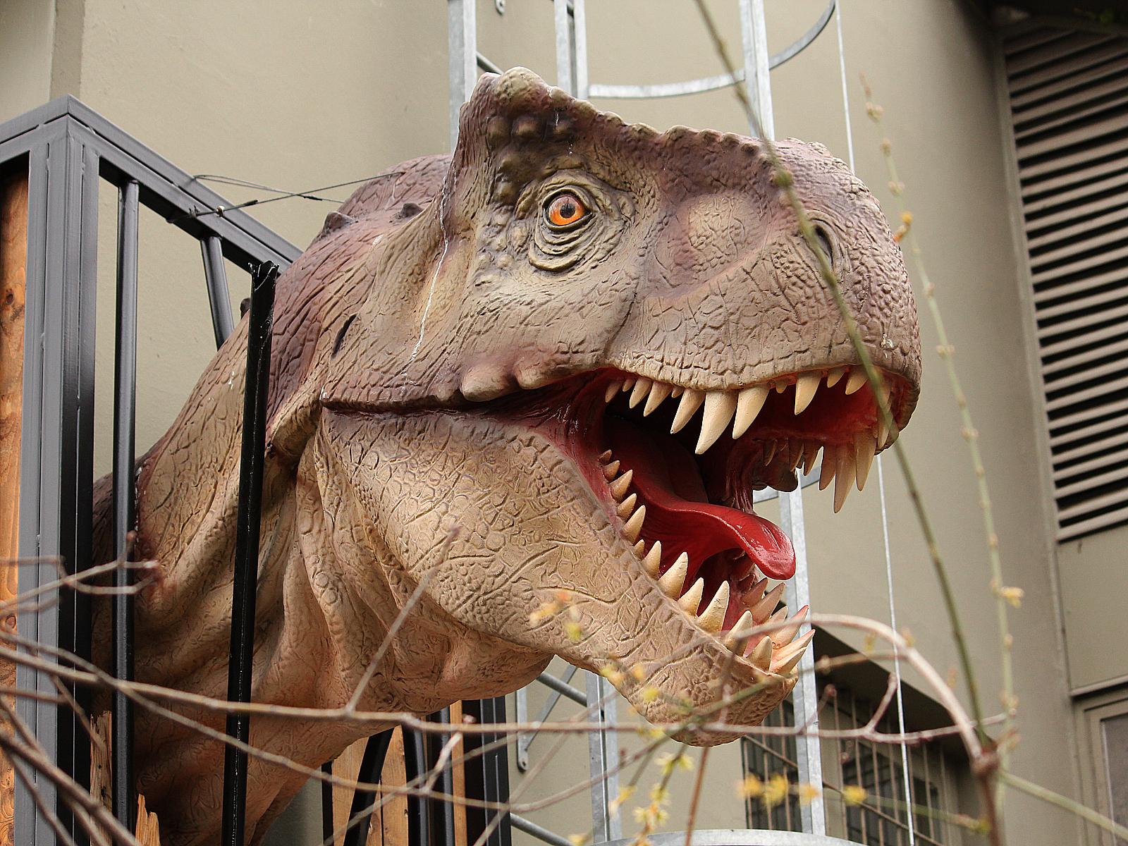 Dinosaurier Hintergrundbilder Gratis