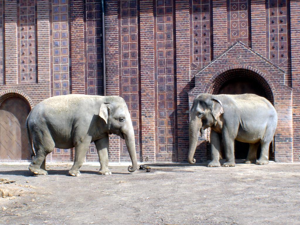 zwei elefanten im zoo hintergrundbilder kostenlos tiere. Black Bedroom Furniture Sets. Home Design Ideas