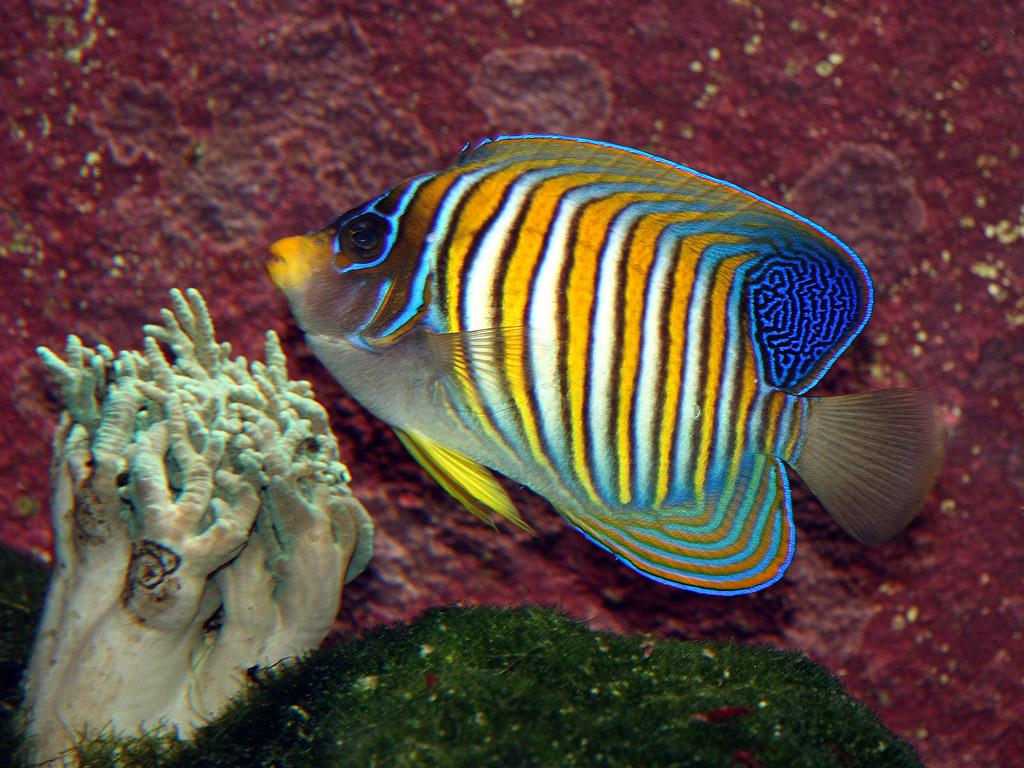 Fisch hintergrundbilder kostenlos tiere for Fisch bilder