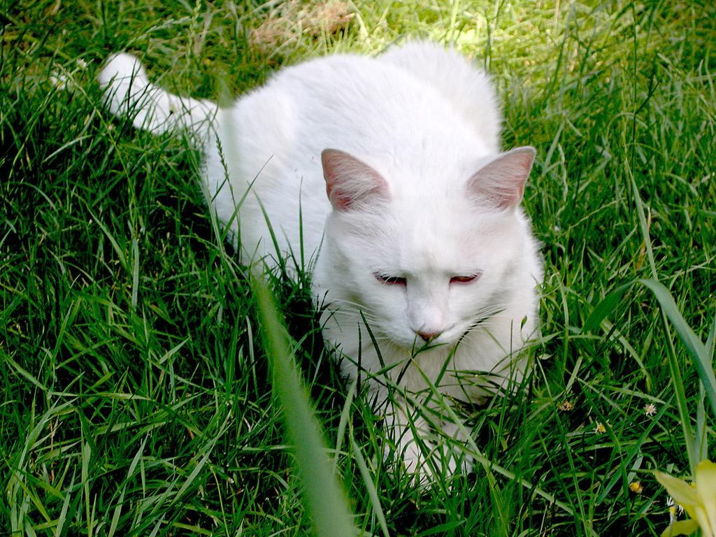 Katze - Kostenloses Hintergrundbild & Whatsapp Profilbild