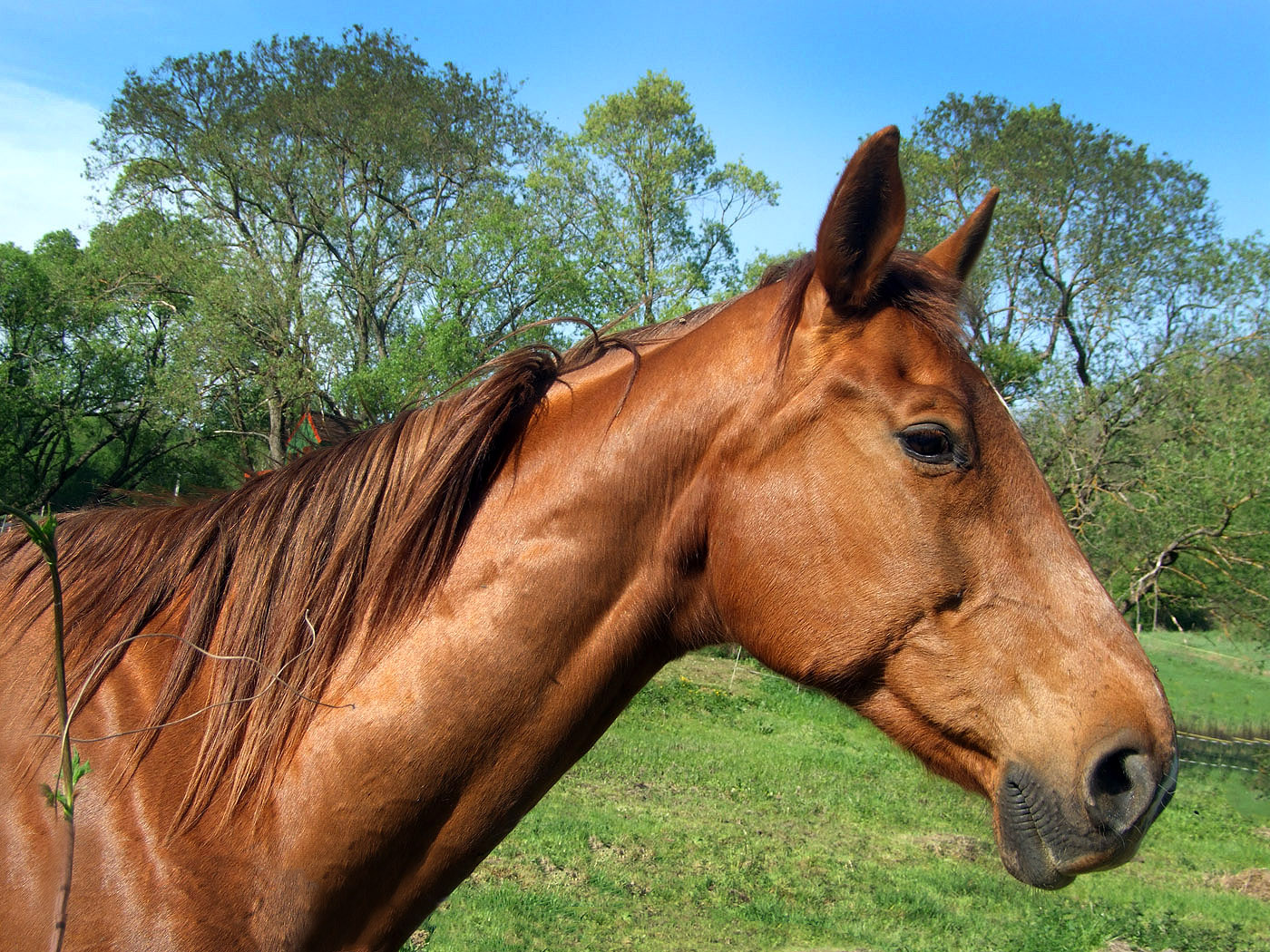 Pferd Hintergrundbilder - schöne Bilder kostenlos