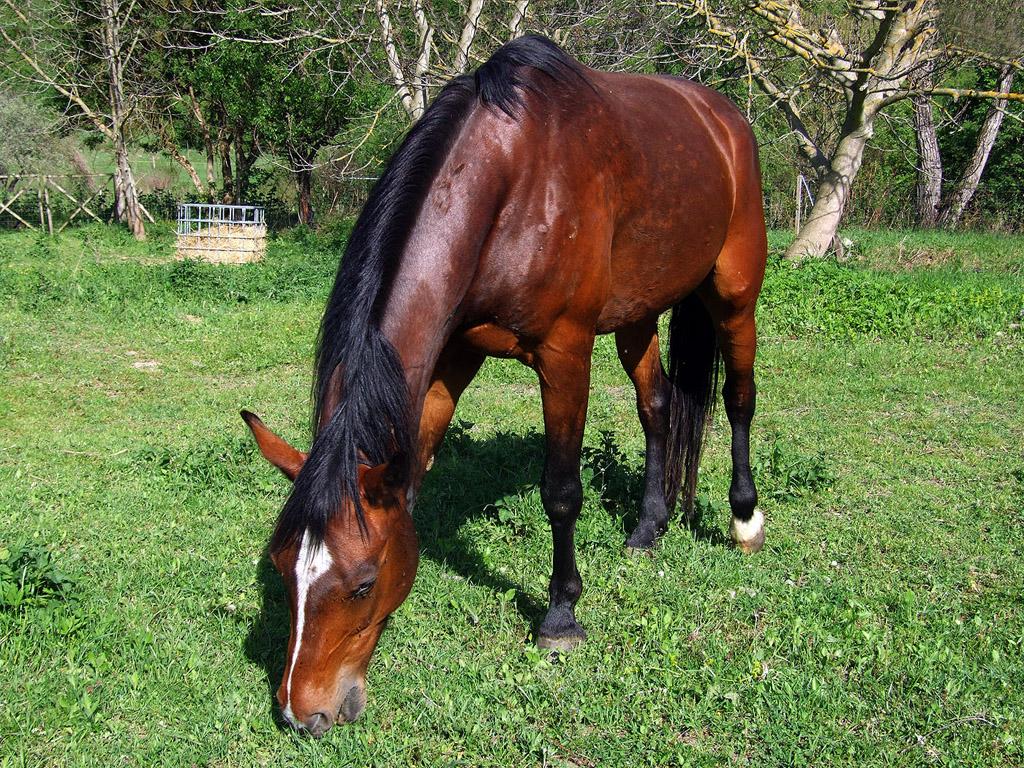 Föj Mit Pferden