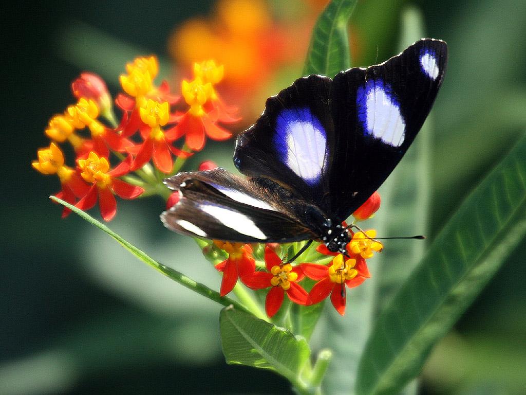 Schmetterlinge Kostenlos